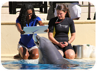 Painting With The Dolphins