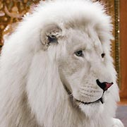 White Lion Animal Facts - More information on mark url