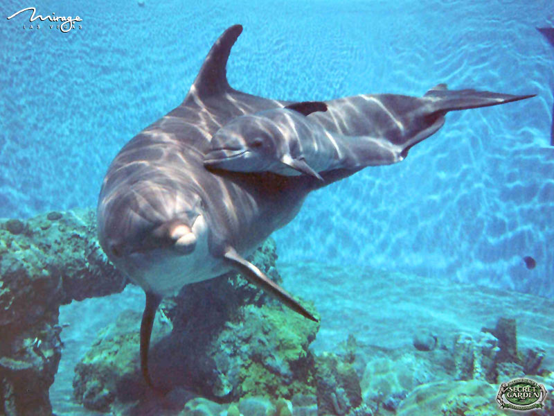 hd animal wallpapers hd dolphins wallpapers